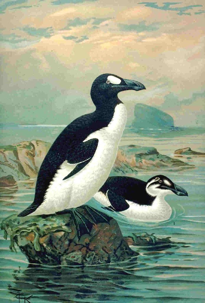 Avian medicine Research Papers - Academia.edu