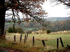 Crossford (Lidwit) Tags: autumn tree field leaves landscape geotagged lanarkshire naturescene