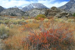 Cerro Gordo Buttermilk 356 (Steve Perdue) Tags: fallcolor 395 perdue easternsierra