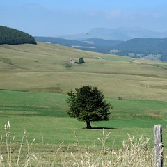 Auvergne. Les monts du Cezallier. (YIP2) Tags: france mountains tree arbre brion auvergne lonelytree monts cantal jassy godivelle cezallier francelandscapes