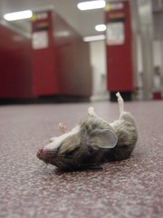 (John Donges) Tags: dead mouse floor turnstile patco speedline