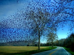 Startling Starlings (LynchburgVirginia ) Tags: virginia bravo searchthebest lexington trophy hdr magicdonkey specland specnature