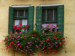 Windows of Italy (Kathy~) Tags: wood windows red italy brown green yellow tag3 taggedout tag2 tag1 view mother 2006 september explore cw top20windows bigmomma interestingness37 i500 impressedbeauty aplusphoto photofaceoffwinner pfogold challengew herowinner