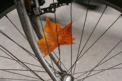 Herfst in Amsterdam (Liesje) Tags: autumn fall amsterdam bicycle leaf flickrettes