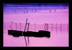 Waterbirds (RetBaron) Tags: pink net heron water birds rose boat pond czech barker bohemia voda waterbirds redbaron sedlec 80200mm 80200 southbohemia ptci lo jin echy rybnk blata retbaron jinechy vodn hernshaw jihoech voleek oleek volavka popelav pitn vlov rybnka