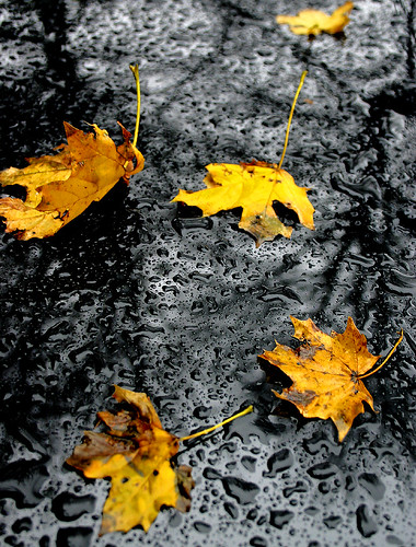 Autumn-Leaves-Image