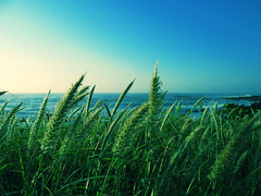 ocean breeze (1ragincajun) Tags: ocean blue sky green grass hawaii breeze sandys southshore sandybeach powershota610