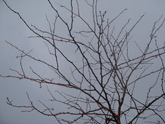 Spindle (belleseptembre) Tags: deleteme5 winter deleteme8 sky deleteme deleteme2 tree deleteme3 deleteme4 deleteme6 deleteme9 fall deleteme7 dark evening deleteme10 bare branches rainy