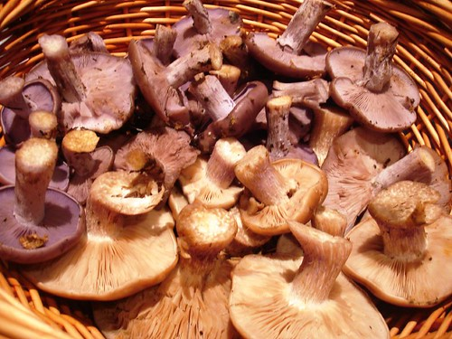 Blewits Field and Wood