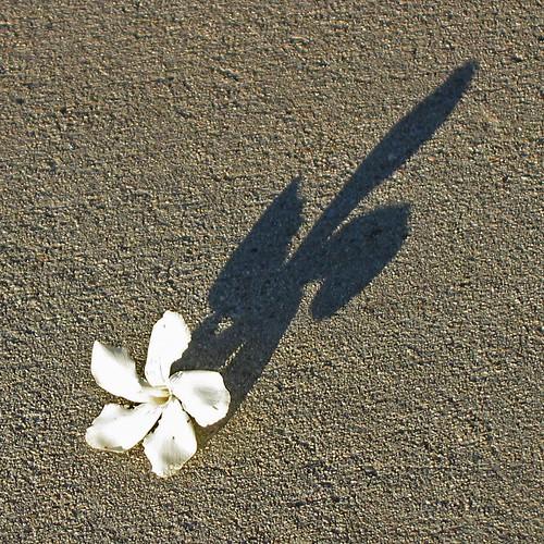 Little Flower, Big Shadow