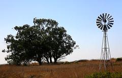 IMG_0820 (Sam's Exotic Travels) Tags: california trees windmill rural america highwayone sam sams hwy1 travelphotos samsays samsexotictravelphotos exotictravelphotos samsayscom