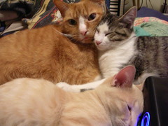 DSCN3755 (natebunnyfield) Tags: cat kitten sam cuddle lucille mybook eisenheim