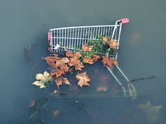 red n green (johanna) Tags: leaves shoppingtrolley riverlee osnossoscarrinhos