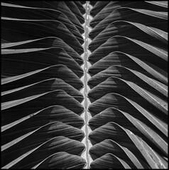 palm in flight - by anjan58
