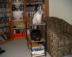 cats 07 (tashwayne) Tags: 2001 cats cat small alabama