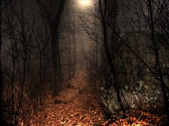 Moonlight Hike on the A.T. ( D L Ennis) Tags: cliff moon mist mountains fog night virginia hike moonlight blueridge appalachiantrail appleorchardmountain thunderridge abigfave p1f1