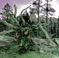 I Had A Nightmare... (Beefus) Tags: orange southwest nature look hat landscape utah ut scenery hiking down canyon hike odd edge ledge bryce oops nightmare hikers whoa shopped medusa bizarre meatball infamous jerky splat frightening freefall beefjerky brycecanyonnationalpark afterthefall meatballeyes justoutofreach beefus viewfromtheledge wackyshots thatsabighole justalittlemore gravitysucks medusaroot beefishlookingtree