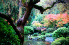 Japanese Gardens Moon Bridge (Gigapic) Tags: usa topf25 oregon garden portland japanese bravo unitedstates dreamy japanesegardens jardins orton moonbridge interestingness24 cy2 challengeyouwinner abigfave weeklychallenge1007 superhearts