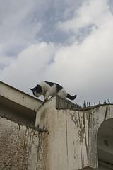 Cat on a wall (Bim Bam) Tags: car rain asian flood games vehicle souk doha qatar suq bim