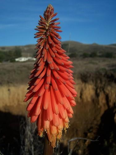 20070118 Wildflower