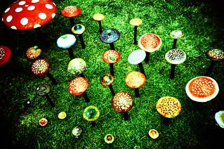 magic mushrooms from lomo