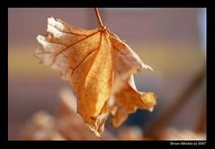 The Leaf (mndez) Tags: leaf naturesfinest blueribbonwinner outstandingshots abigfave anawesomeshot impressedbeauty ultimateshot travelerphotos