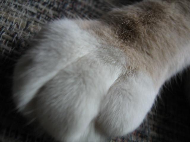 A Paw