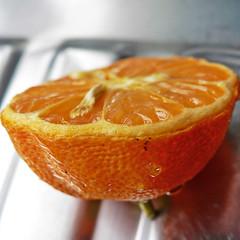 cut in half (Brenda Anderson) Tags: orange macro fruit cut half citrus squarecrop curiouskiwi utatainhalf brendaanderson inagroup curiouskiwi:posted=2006