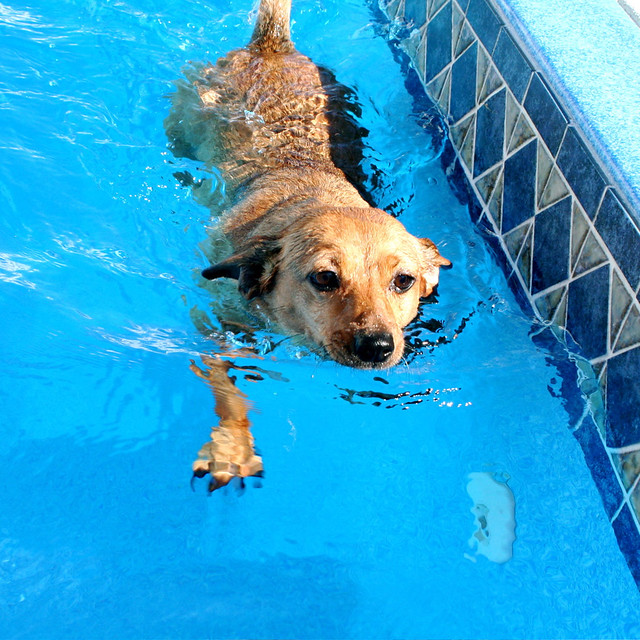 Ado Annie Takes a Swim