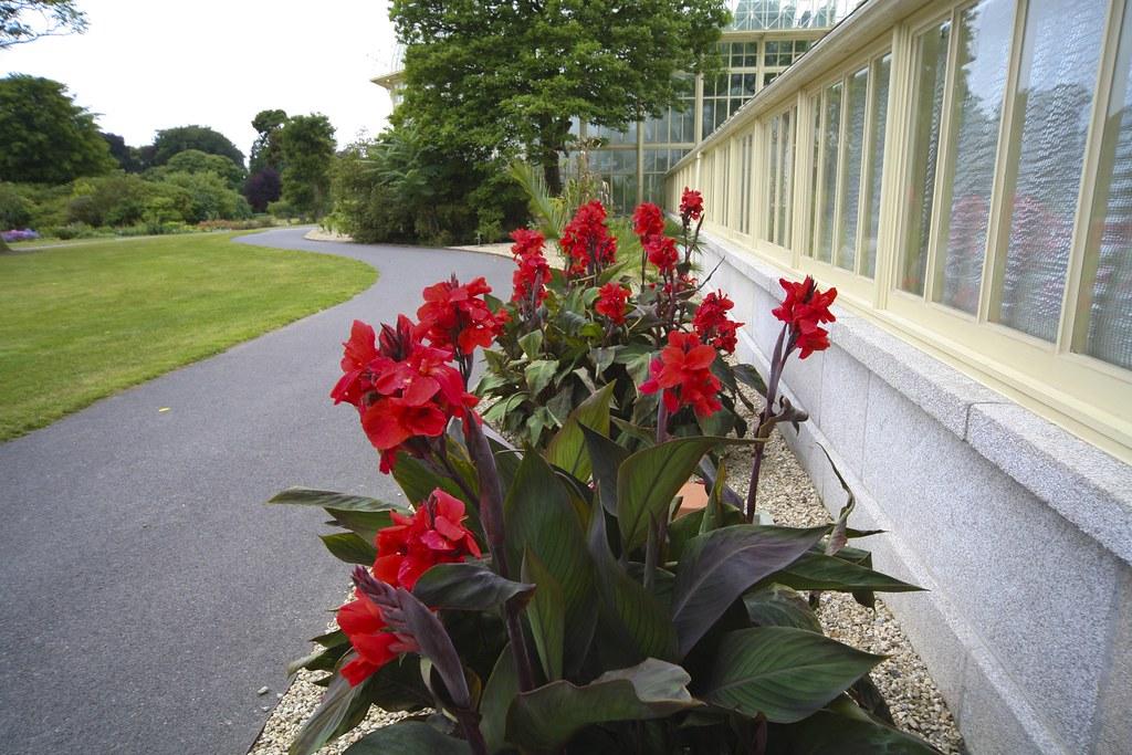 Botanic Gardens - Dublin (Ireland)