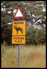 Wild Dog Crossing Place - by Richard Pluck
