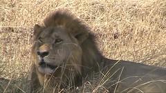 safari010
