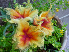 Felted flowers - Bubble felted w/ various colors roving (sierrasndy) Tags: flowers wool felted felting fantasy roving soapy sudsy