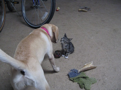 gretchy and kitten