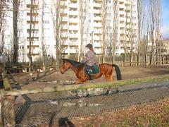 Gropiusstadt (Schockwellenreiter) Tags: architecture tiere architektur pferde photogabi neuklln rudow gropiusstadt