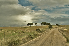 on the road IX (_tonidelong) Tags: road españa spain carretera ontheroad dehesa extremadura caceres
