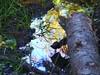 puddle (Navas) Tags: autumn reflection forest germany puddle utatathursdaywalk28