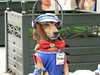 Musicman Dog (Hooman Mesgary) Tags: music dog geotagged cuba handsfree geotag interestingness136 i500 explore20070511