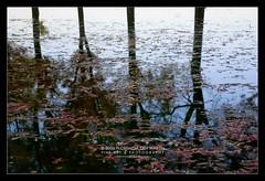 Nature's reflexion