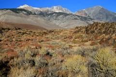 Cerro Gordo Buttermilk 229 (Steve Perdue) Tags: fallcolor 395 perdue easternsierra