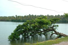 "Cherai beach (Rafeek Manchayil ""Near Perfect"") Tags: country kerala gods kera own malayalam keralam malayali malabar calicut keram godsowncountry keralite rafeek manchayil vadakara rafeekmanchayil kadathanad puduppanam"