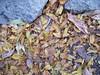 Fallen - Photo-A-Day for Nov, 4, 2006