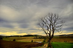 Tree Denuded (Magdalen Green Photography) Tags: tree rural d50 landscape dundee curves scottish hills iain hdr denuded