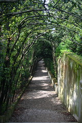 Path Along the Viottolone - Giardino di Boboli