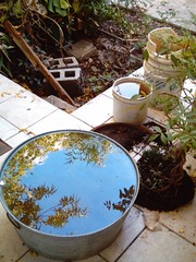 Reflection (mi patio) (Kike_Guz) Tags: plants reflection tree water arbol botes agua plantas dirty reflejo sucio