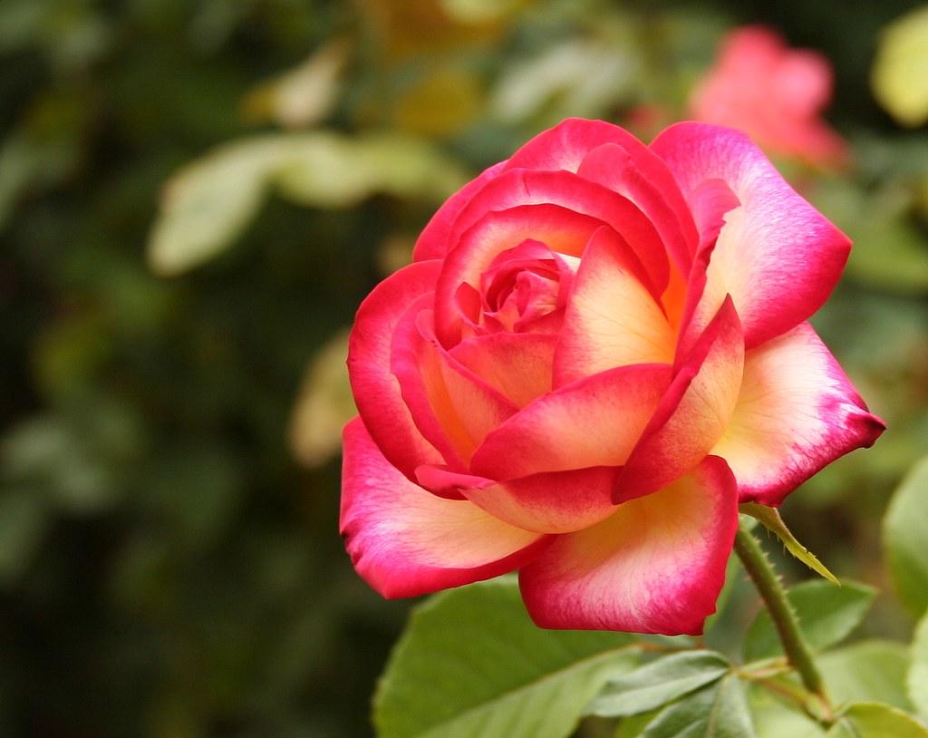 My Flower...