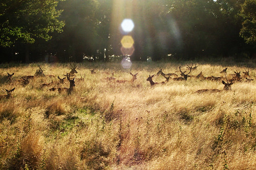 deers in the sun