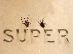 SUPER (Leo Reynolds) Tags: shadow animal fauna canon word eos iso100 spider arachnid utata f8 135mm 30d 0003sec 0ev hpexif leol30random groupallanimals grouputata threadtwtme threadtwtme6fri threadtwtme1sun xratio43x xleol30x