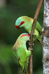 (DanielKHC) Tags: bird animals singapore sony alpha jurongbirdpark a100 danielcheong danielkhc