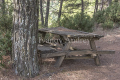 Table under a pine tree (Ivanov Andrey) Tags: table bench pine grove wood bush grass mountain landscape hill needles board old evening twilight awalk ajourney kalavryta peloponnese greece